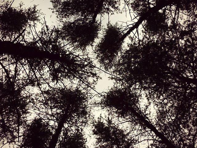 Knarly Pines