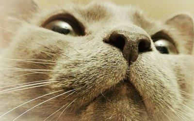 Lord Kitty