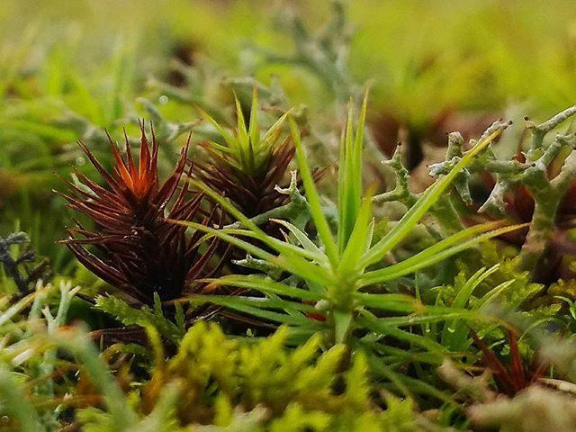 Moss #latitude35.5
